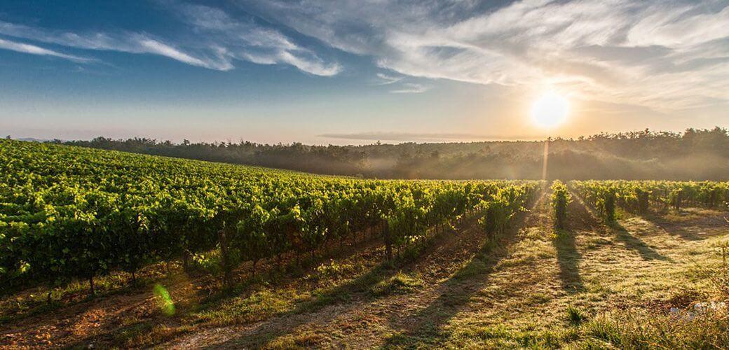Axe recherche - Wine and Spirits - KEDGE