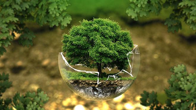 Le paradoxe de l'éco efficience, qui peut parfois nuire à l'environnement - KEDGE